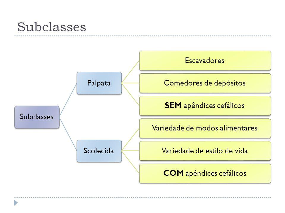 Subclasses Subclasses Palpata Escavadores Comedores de depósitos