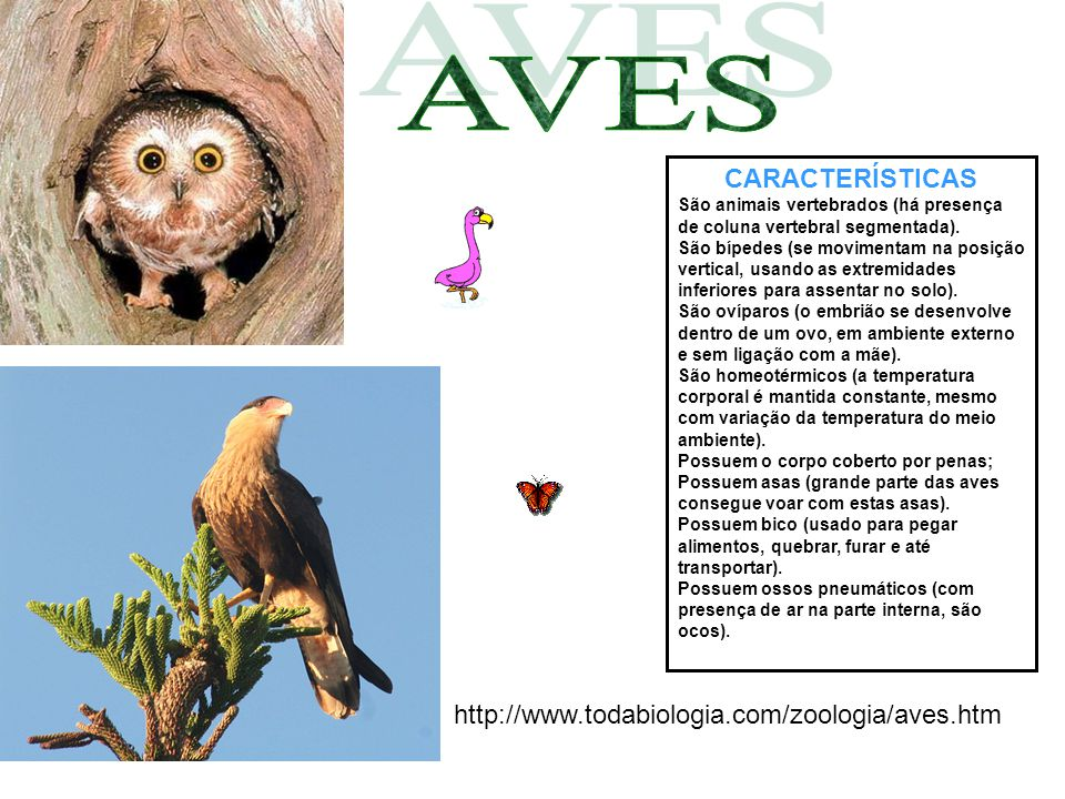 AVES CARACTERÍSTICAS http://www.todabiologia.com/zoologia/aves.htm