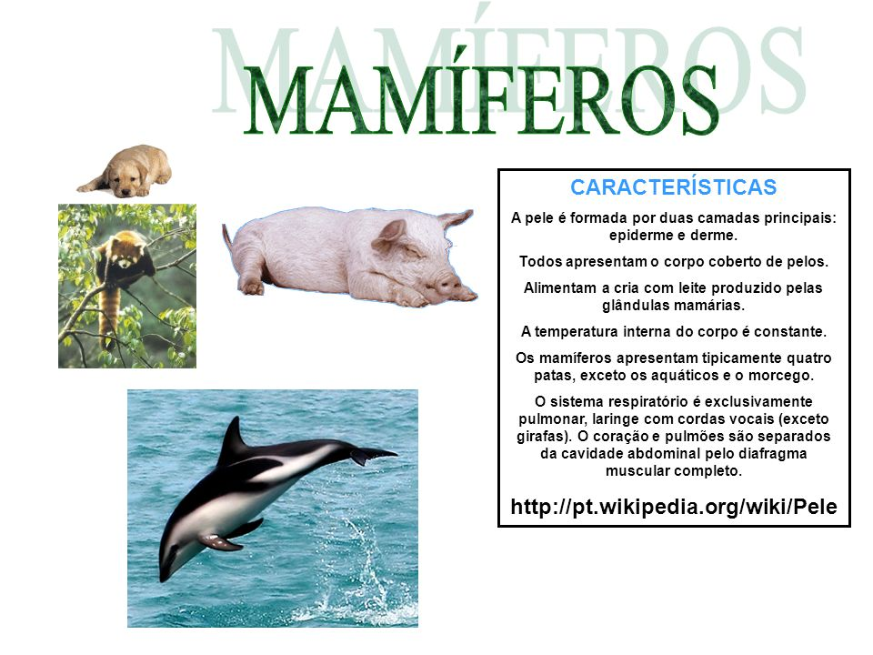 MAMÍFEROS CARACTERÍSTICAS http://pt.wikipedia.org/wiki/Pele
