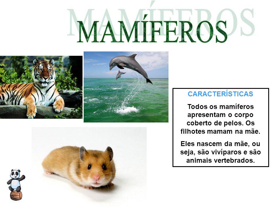 Eles nascem da mãe, ou seja, são vivíparos e são animais vertebrados.
