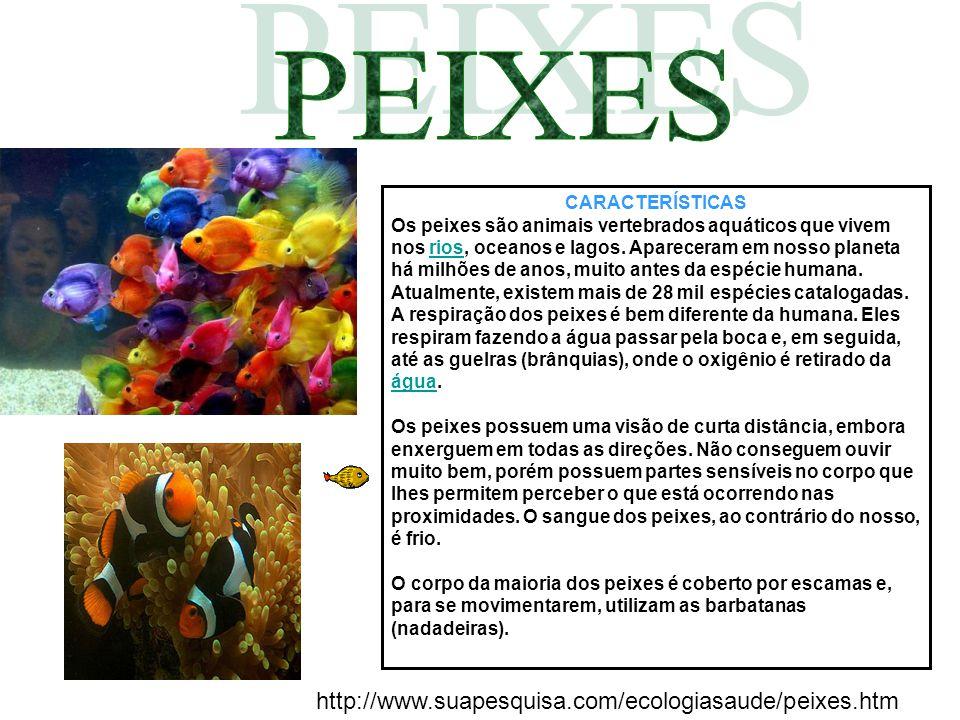 PEIXES http://www.suapesquisa.com/ecologiasaude/peixes.htm