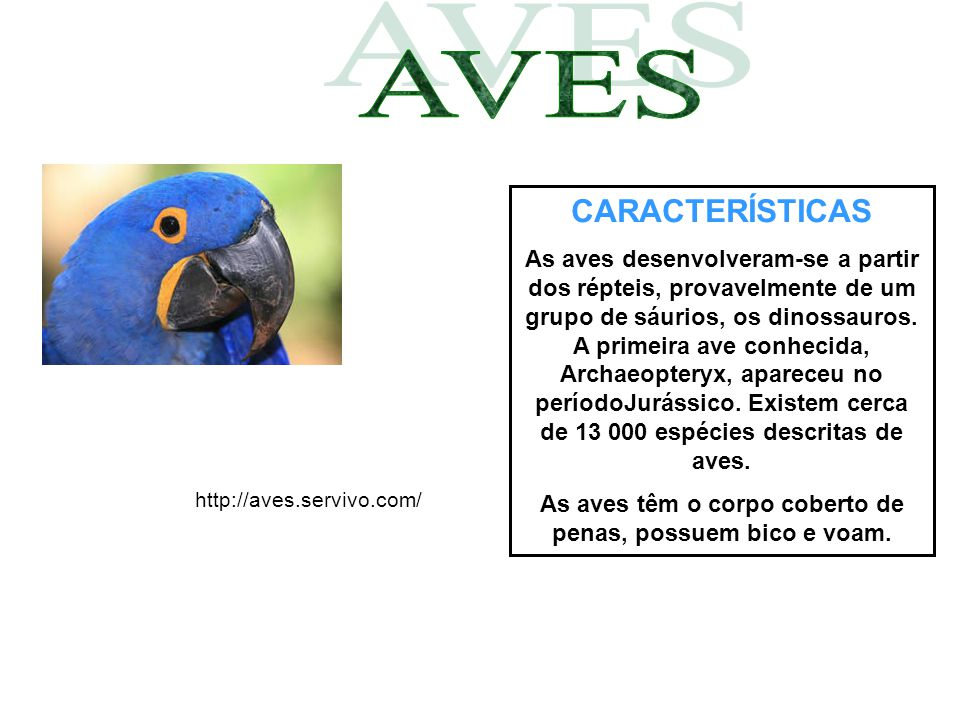 As aves têm o corpo coberto de penas, possuem bico e voam.