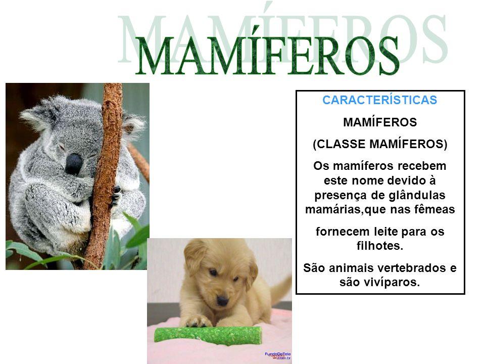 Mamiferos(classe mamifera