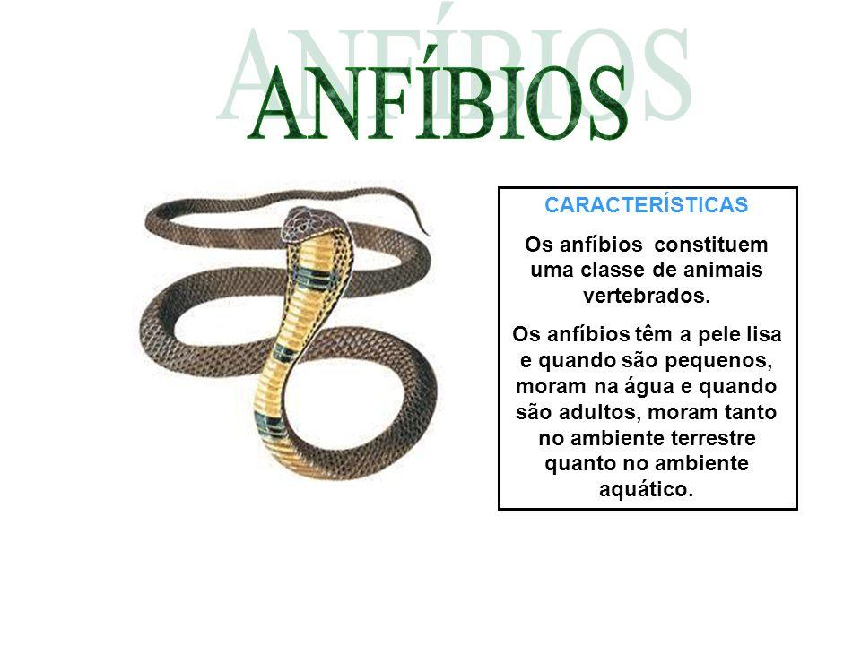 Os anfíbios constituem uma classe de animais vertebrados.