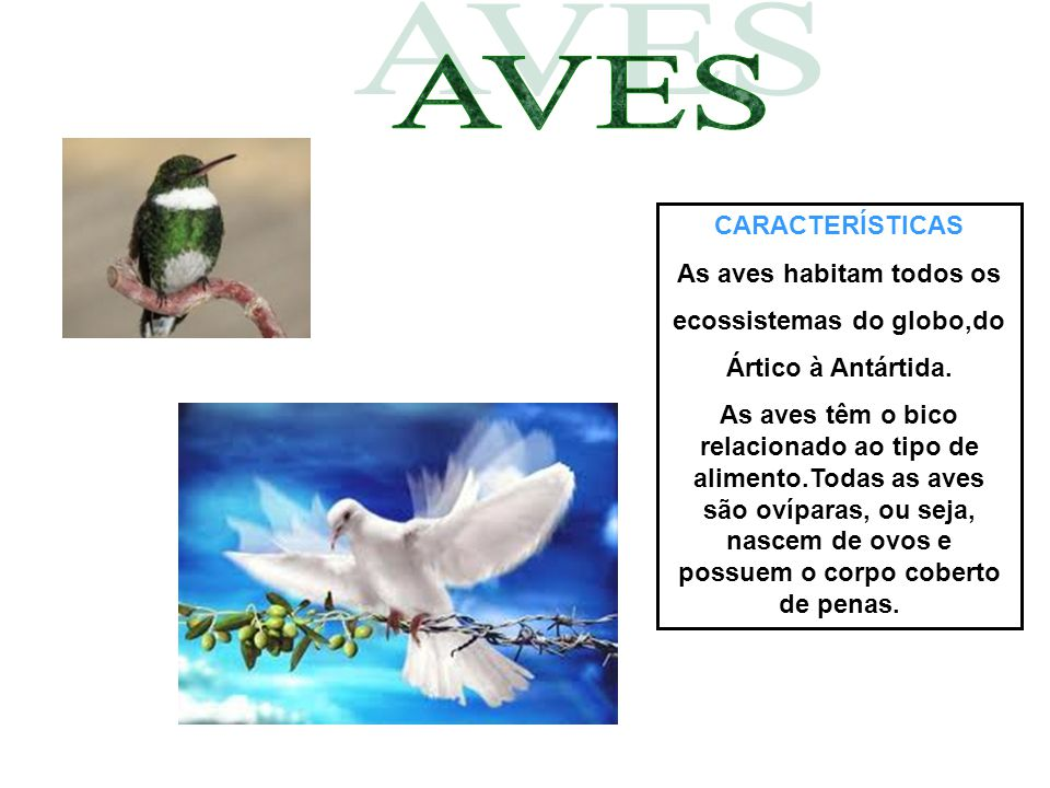 As aves habitam todos os ecossistemas do globo,do