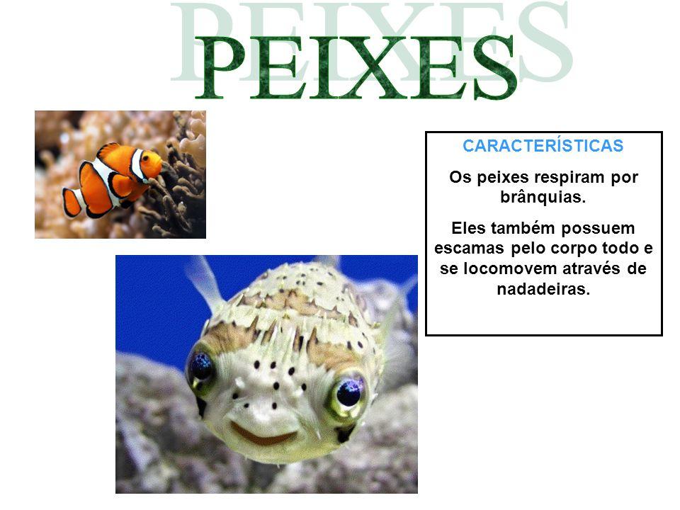Os peixes respiram por brânquias.