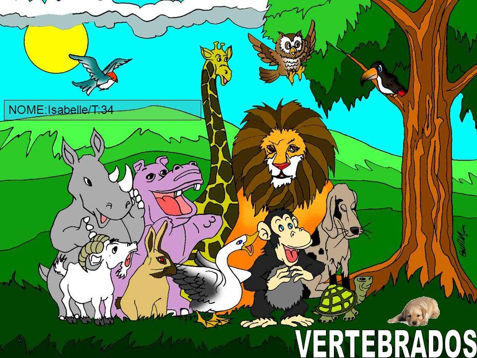 NOME:Isabelle/T:34 VERTEBRADOS