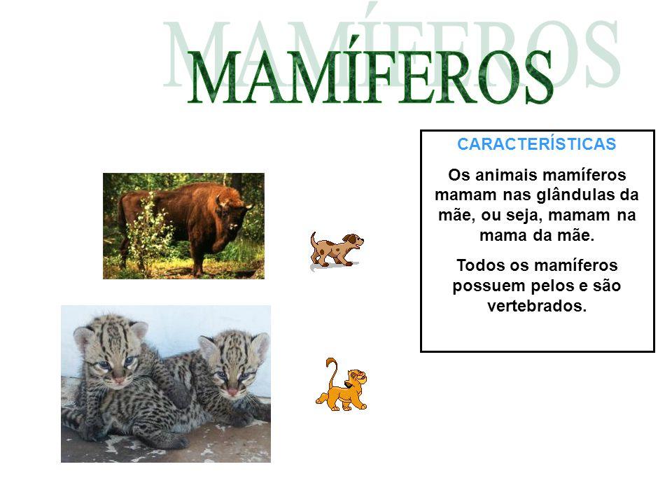 Todos os mamíferos possuem pelos e são vertebrados.