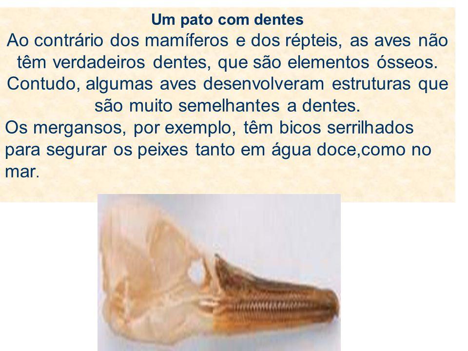 Um pato com dentes Ao contrário dos mamíferos e dos répteis, as aves não têm verdadeiros dentes, que são elementos ósseos. Contudo, algumas aves desenvolveram estruturas que são muito semelhantes a dentes.
