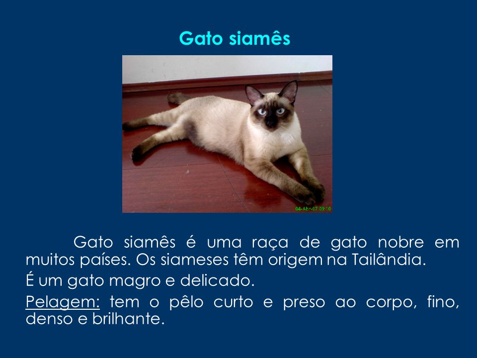 Gato siamês Gato siamês é uma raça de gato nobre em muitos países. Os siameses têm origem na Tailândia.
