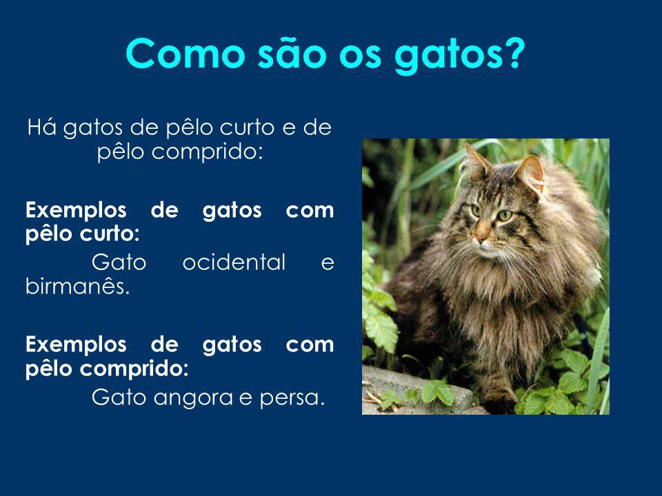 Há gatos de pêlo curto e de pêlo comprido: