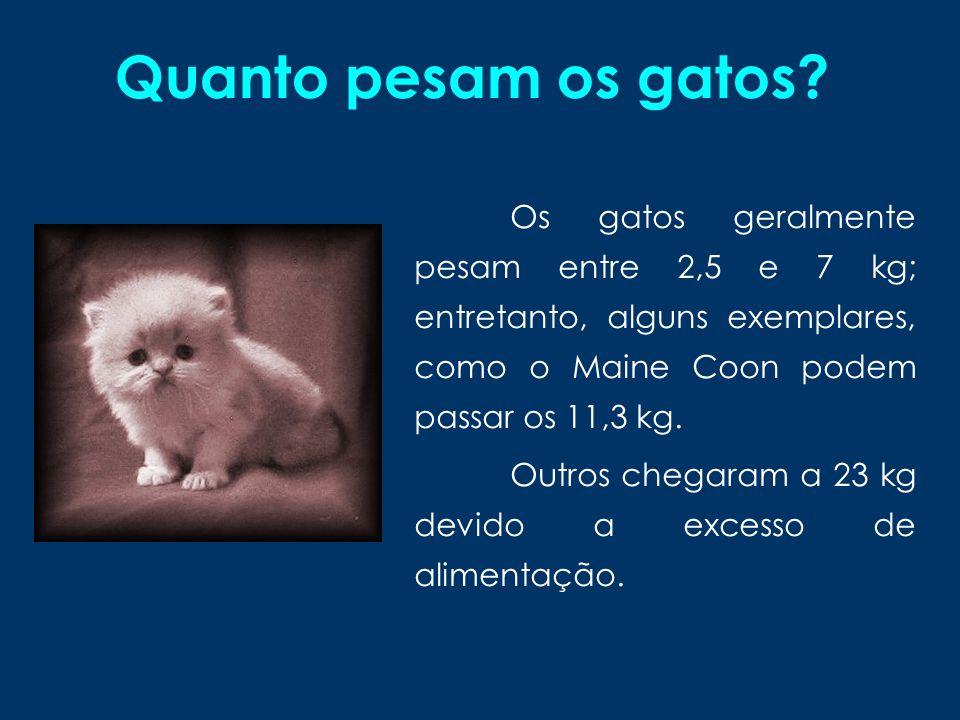Quanto pesam os gatos Os gatos geralmente pesam entre 2,5 e 7 kg; entretanto, alguns exemplares, como o Maine Coon podem passar os 11,3 kg.