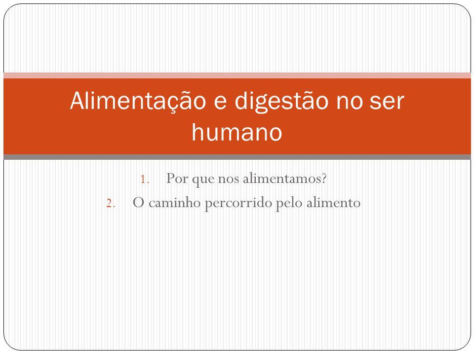 Alimentação e digestão no ser humano