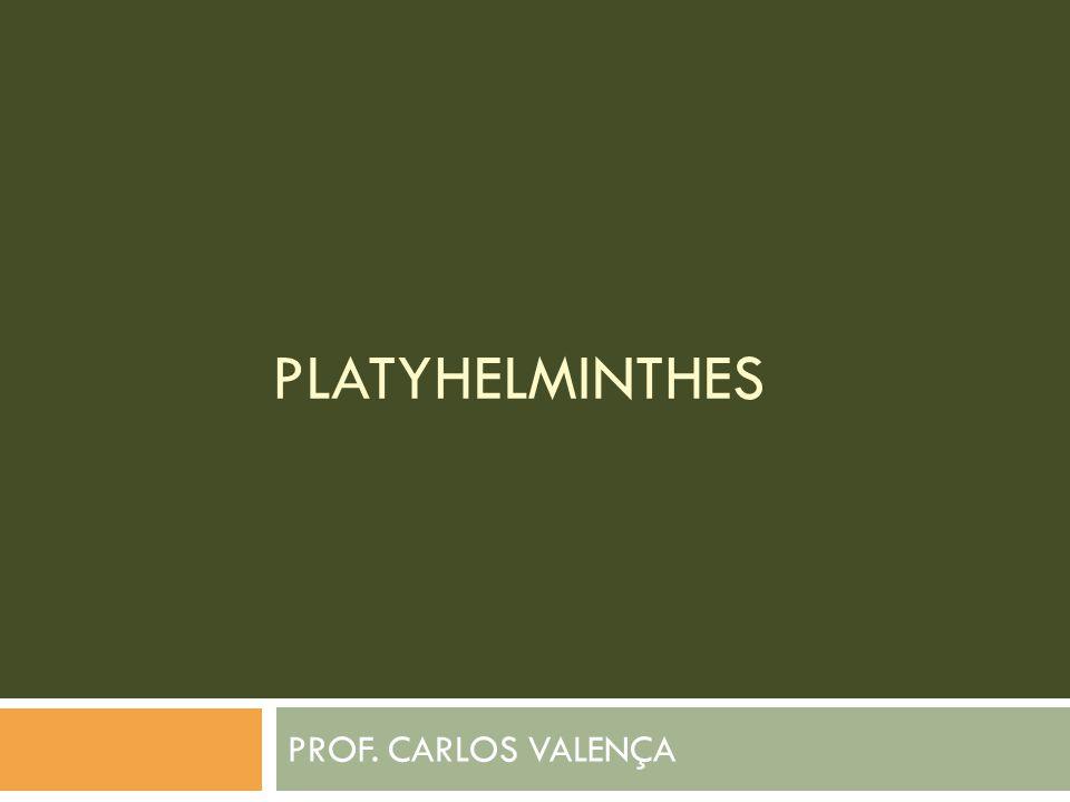 PLATYHELMINTHES PROF. CARLOS VALENÇA