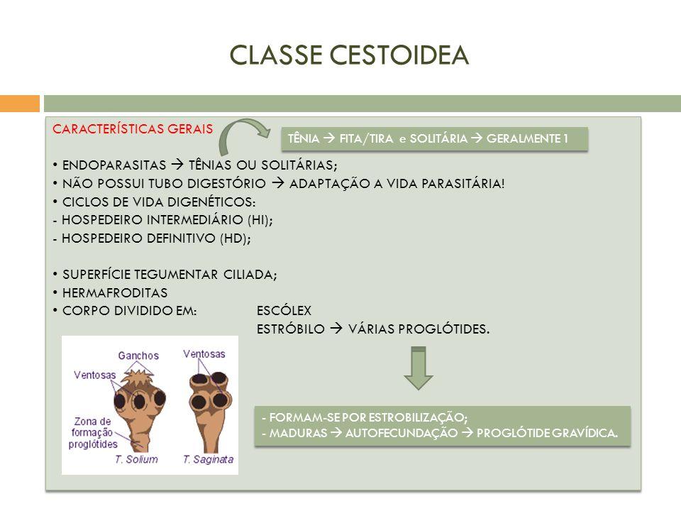 CLASSE CESTOIDEA CARACTERÍSTICAS GERAIS
