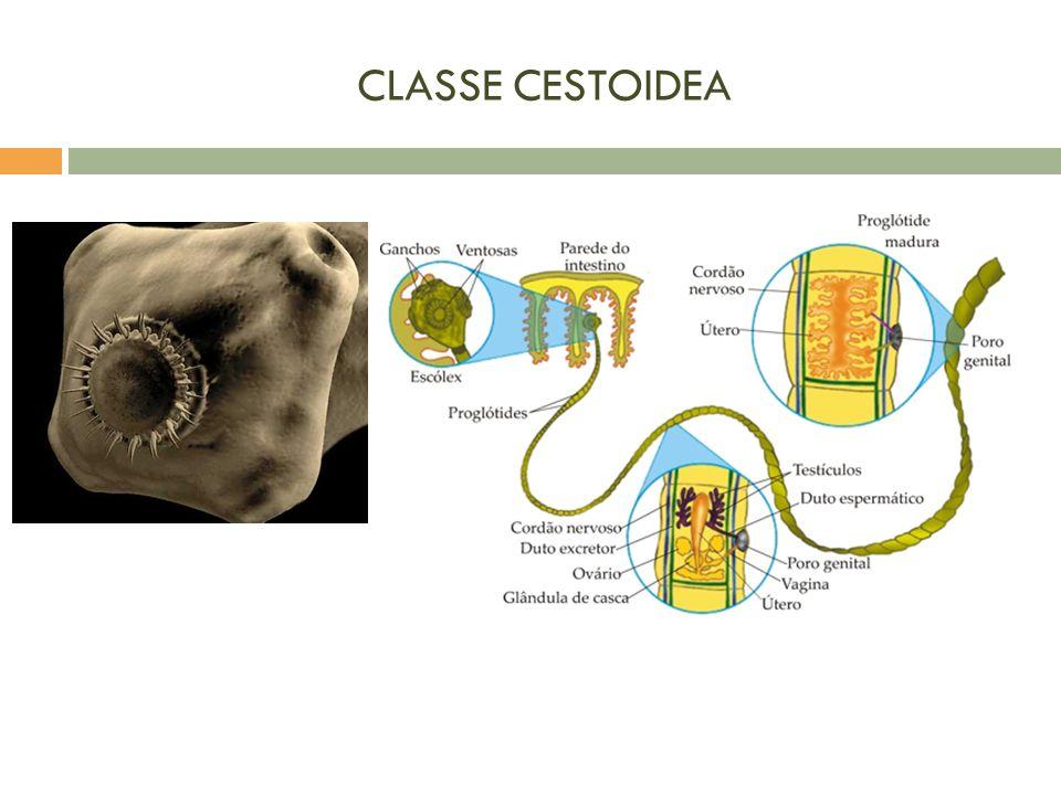 CLASSE CESTOIDEA