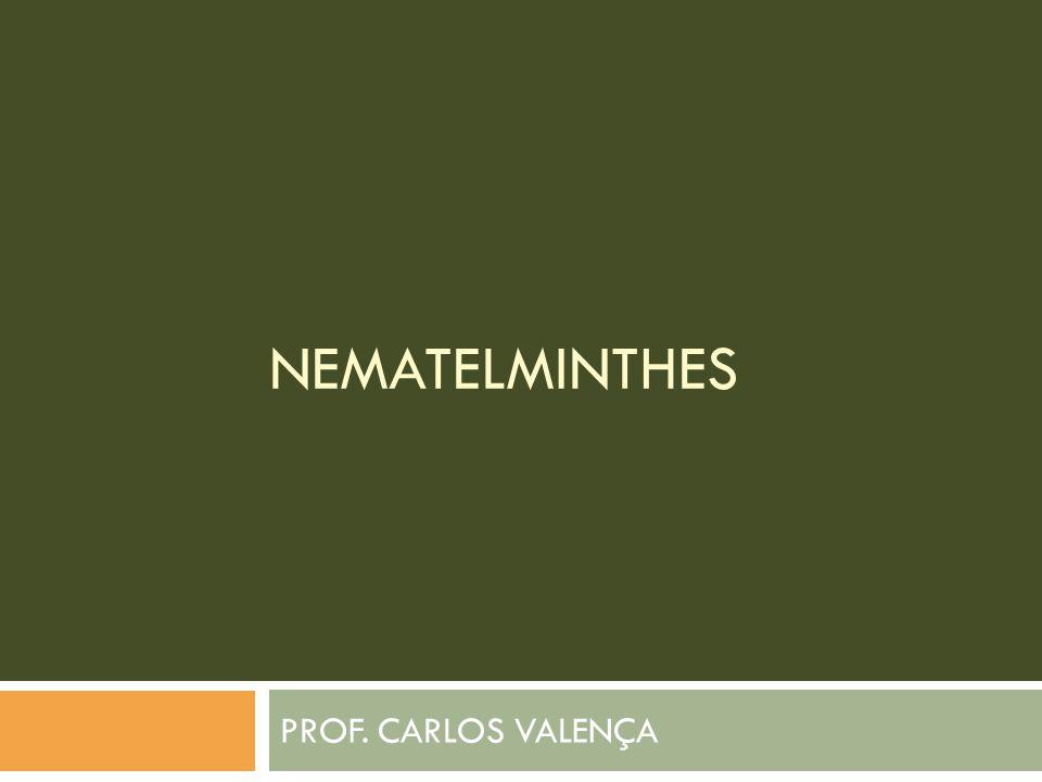 NEMATELMINTHES PROF. CARLOS VALENÇA