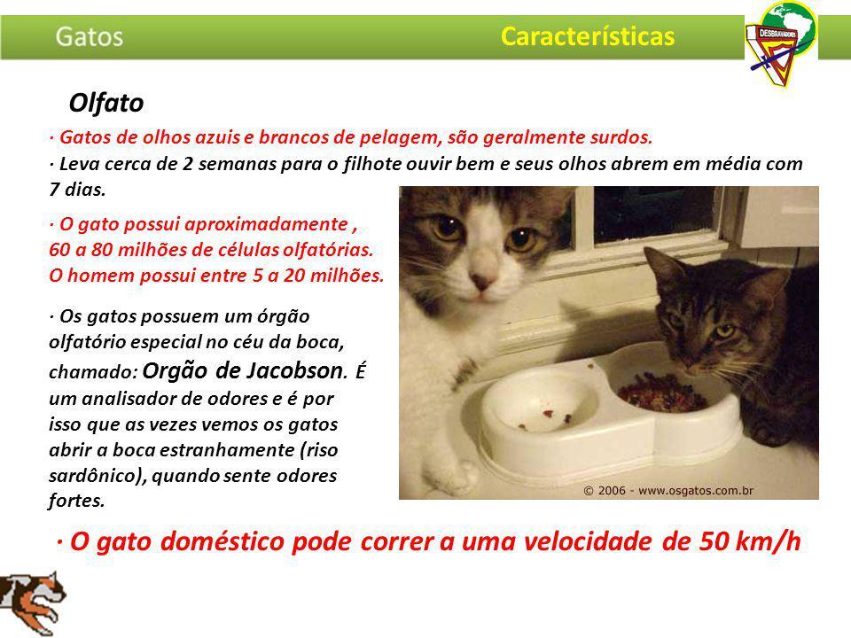 · O gato doméstico pode correr a uma velocidade de 50 km/h