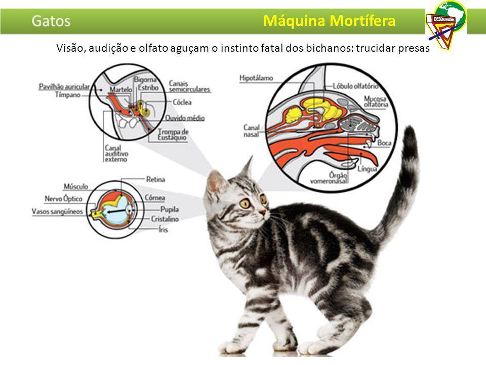Máquina Mortífera Visão, audição e olfato aguçam o instinto fatal dos bichanos: trucidar presas