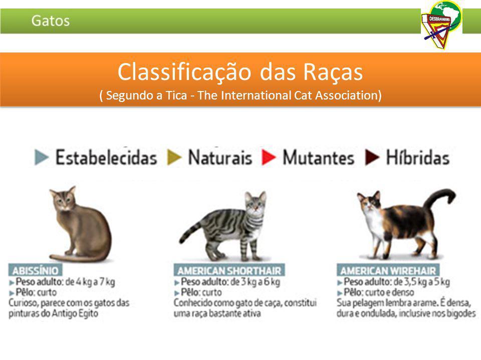 Classificação das Raças