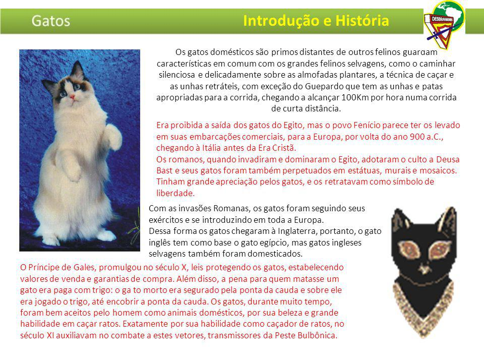 Introdução e História