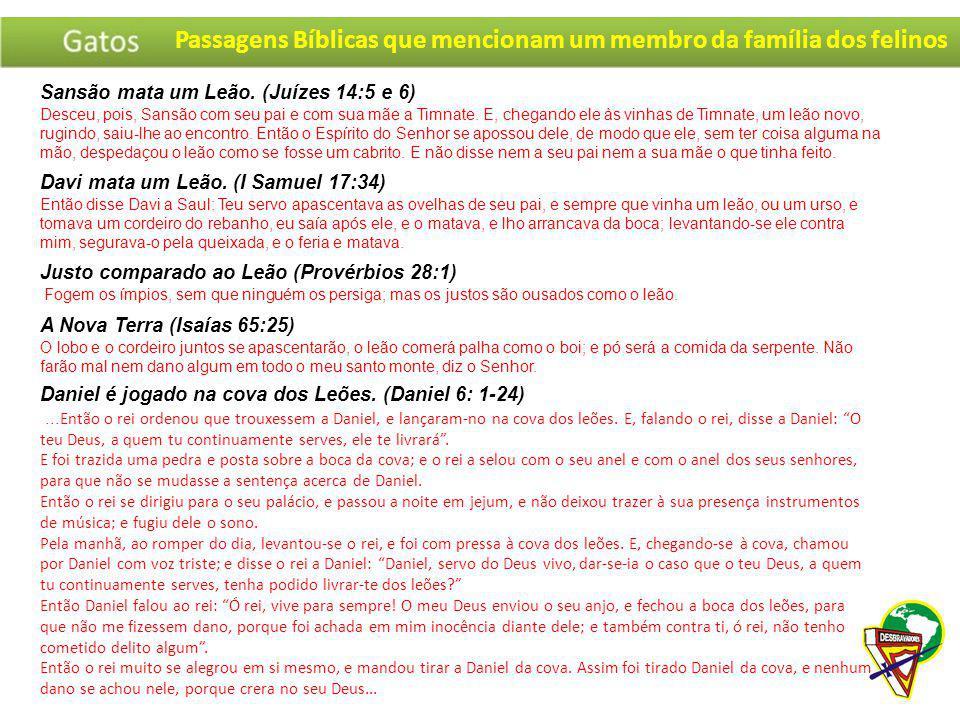 Passagens Bíblicas que mencionam um membro da família dos felinos