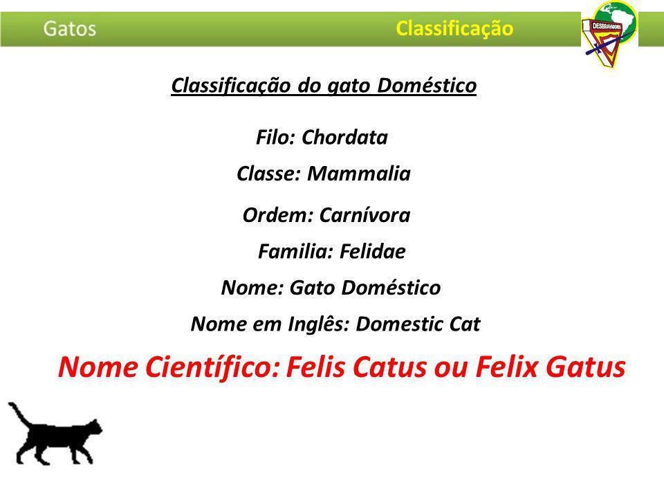 Nome Científico: Felis Catus ou Felix Gatus