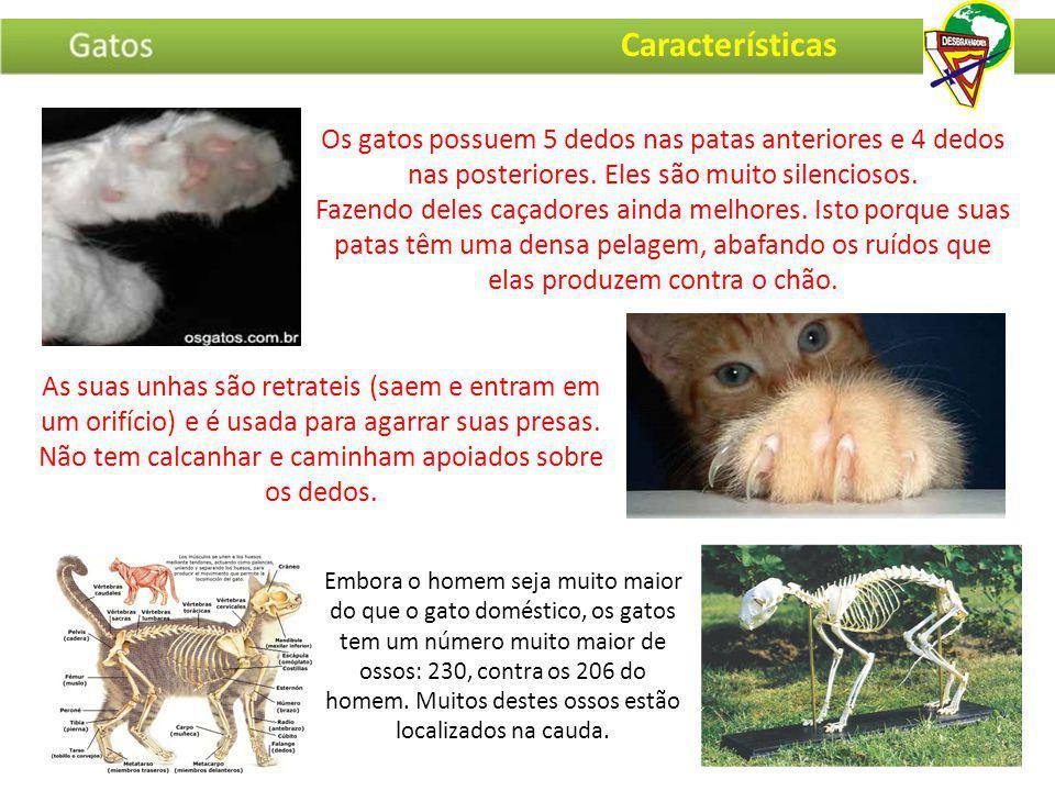 Características Os gatos possuem 5 dedos nas patas anteriores e 4 dedos nas posteriores. Eles são muito silenciosos.