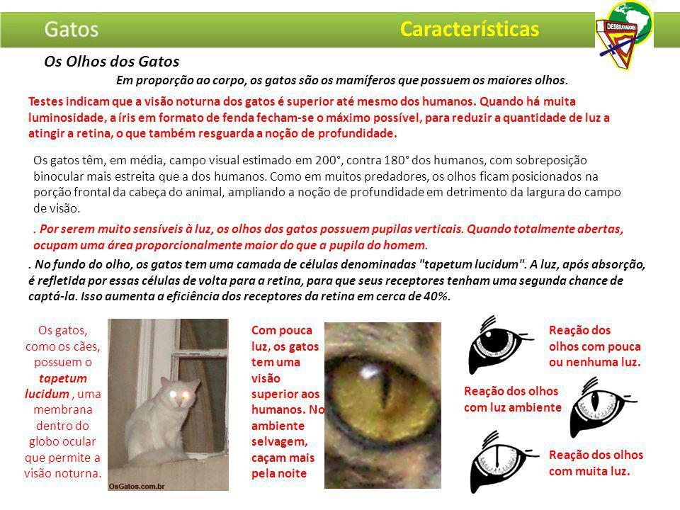 Características Os Olhos dos Gatos