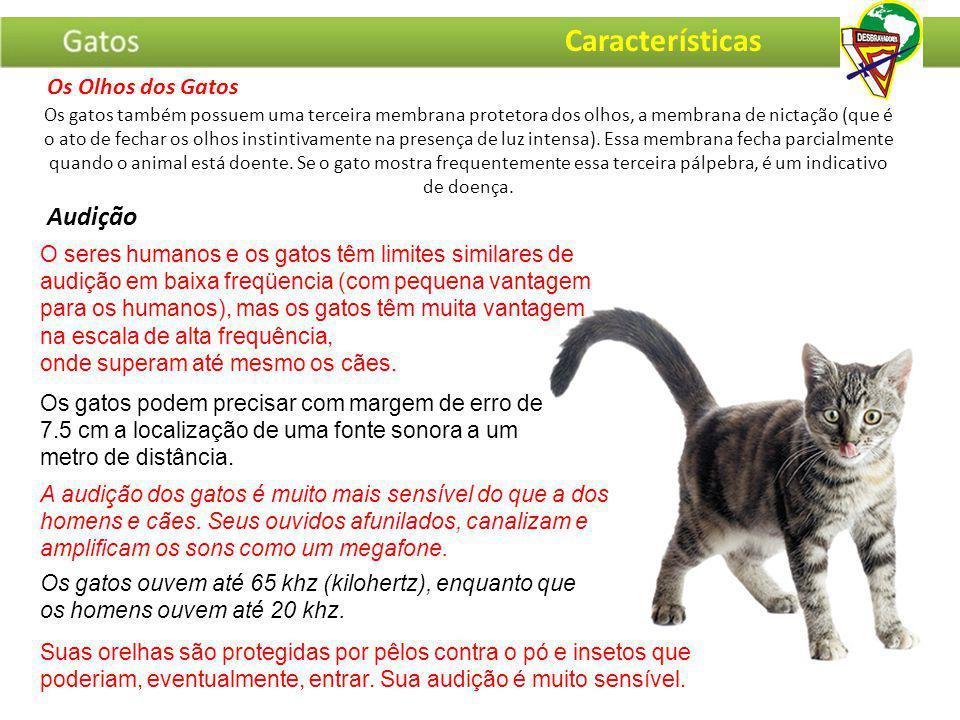 Características Audição Os Olhos dos Gatos
