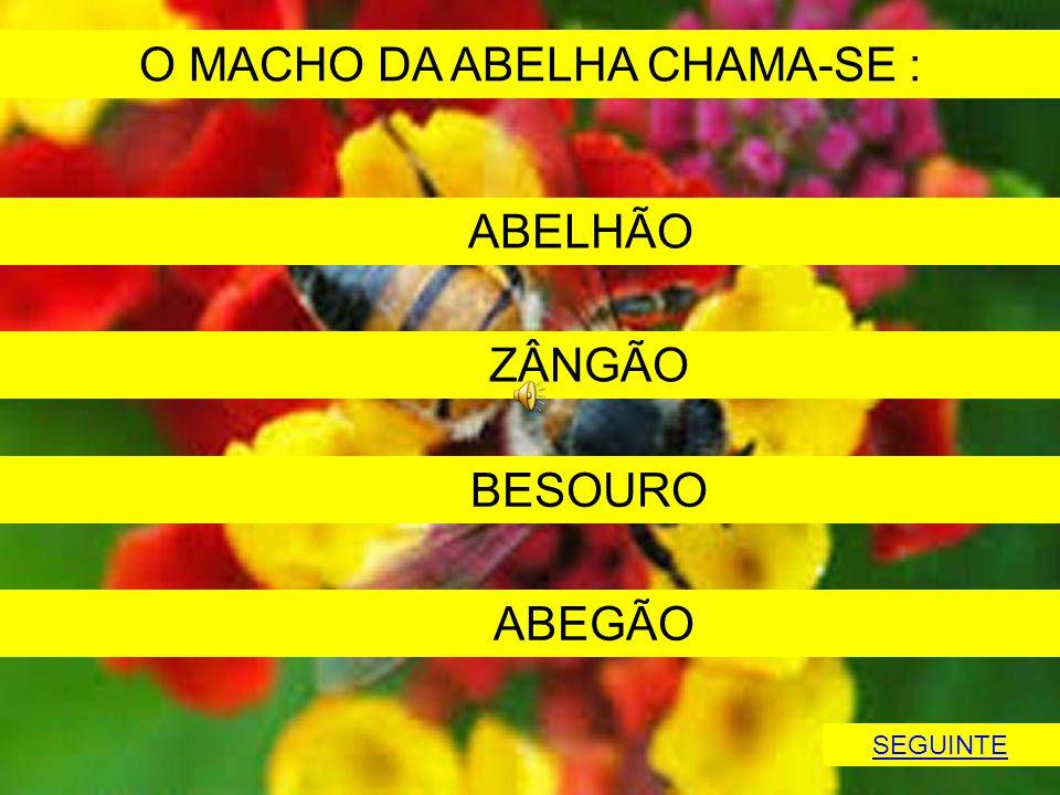 O MACHO DA ABELHA CHAMA-SE :