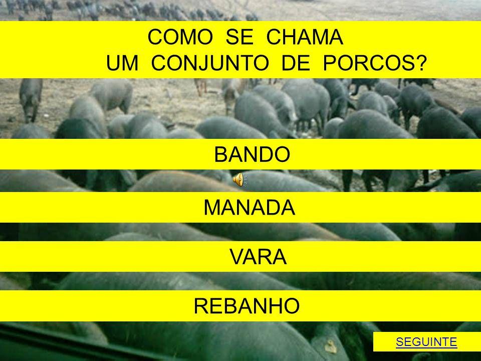 COMO SE CHAMA UM CONJUNTO DE PORCOS BANDO MANADA VARA REBANHO