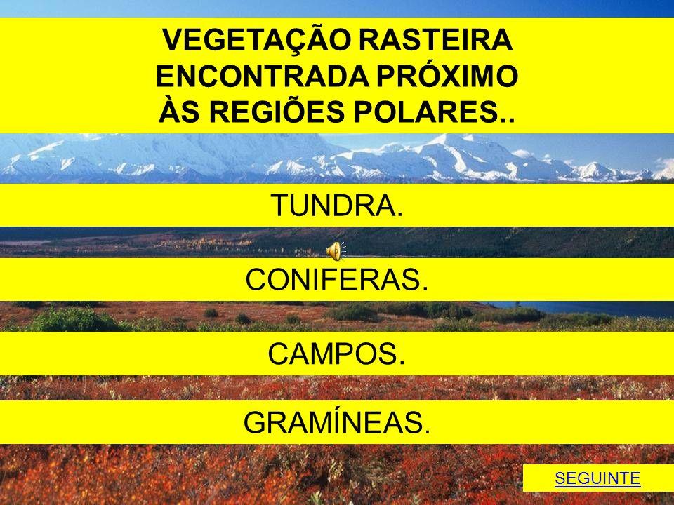 VEGETAÇÃO RASTEIRA ENCONTRADA PRÓXIMO ÀS REGIÕES POLARES..