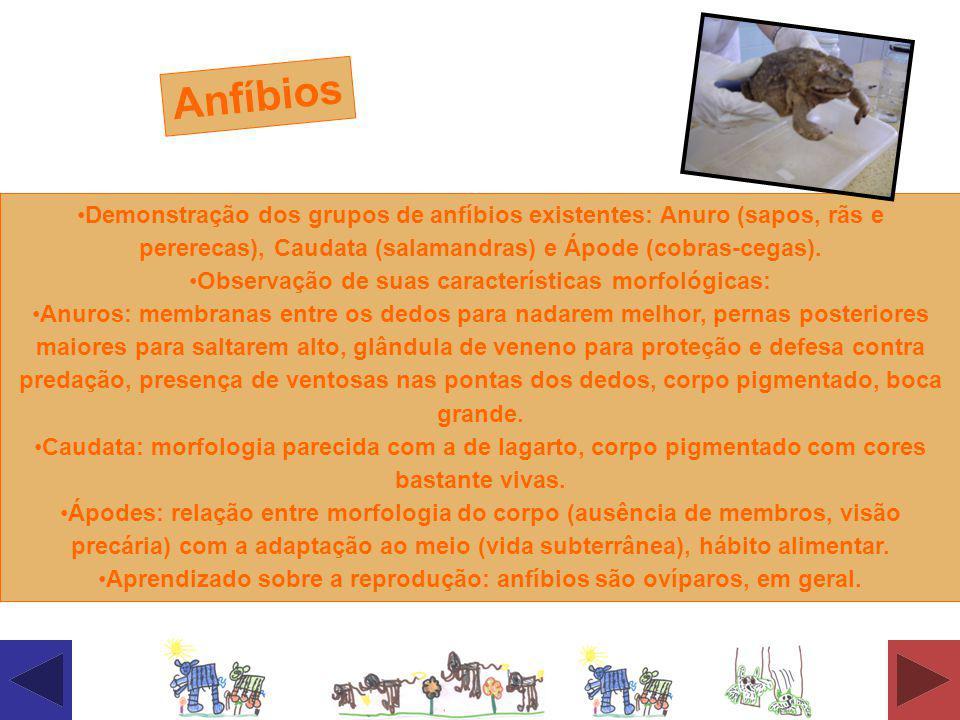 Anfíbios Demonstração dos grupos de anfíbios existentes: Anuro (sapos, rãs e pererecas), Caudata (salamandras) e Ápode (cobras-cegas).