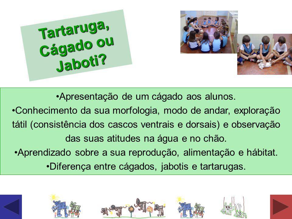 Tartaruga, Cágado ou Jaboti