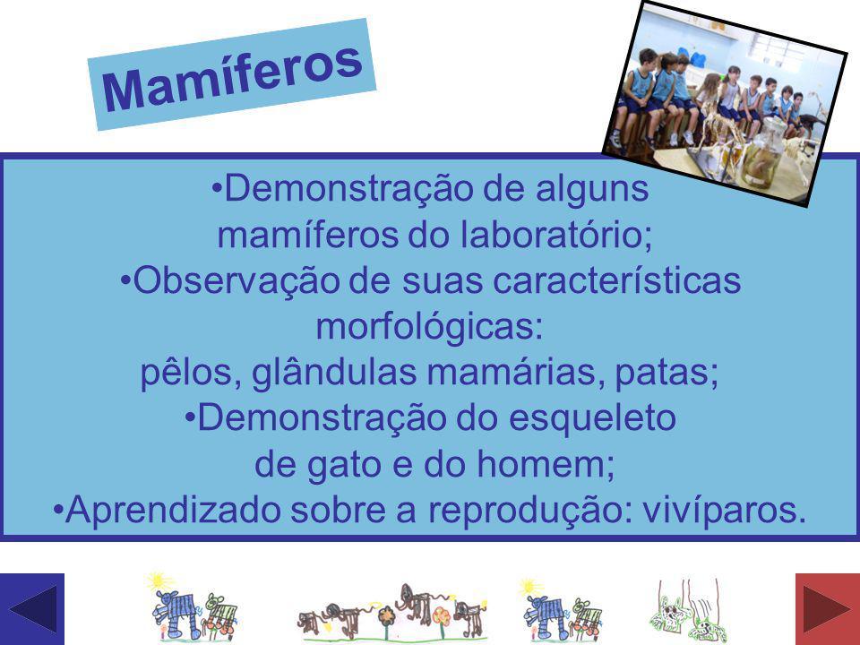 Mamíferos Demonstração de alguns mamíferos do laboratório;