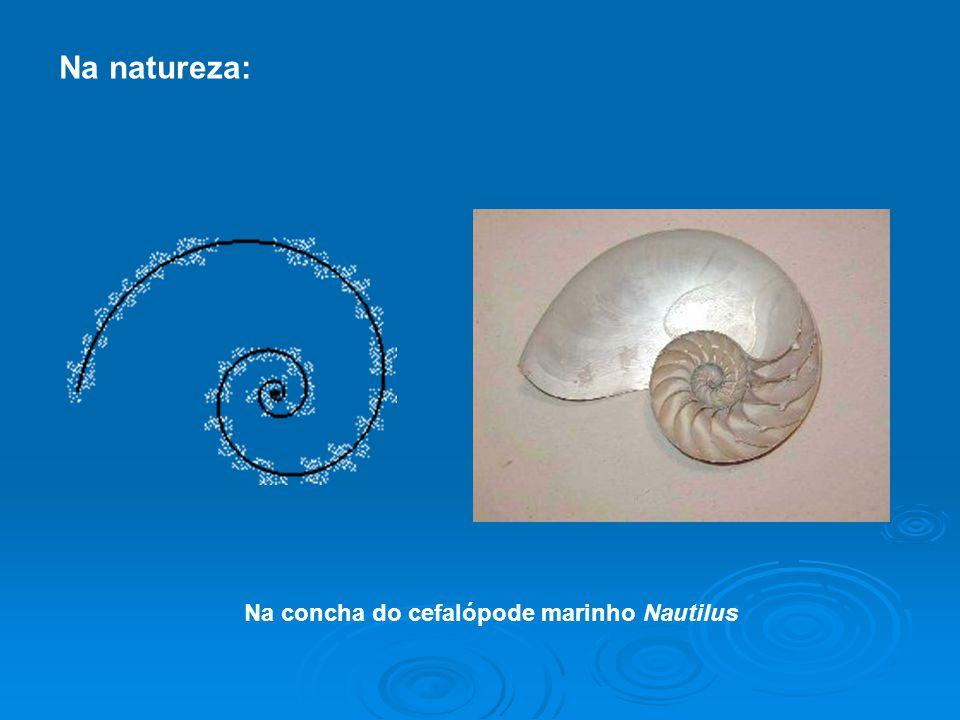 Na concha do cefalópode marinho Nautilus