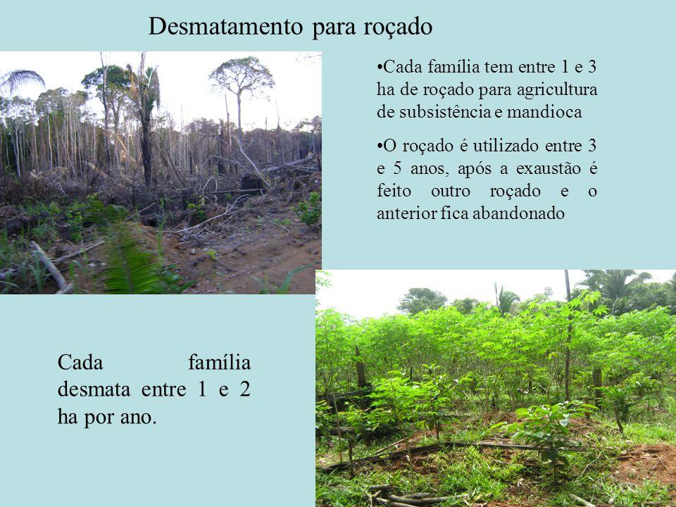Desmatamento para roçado