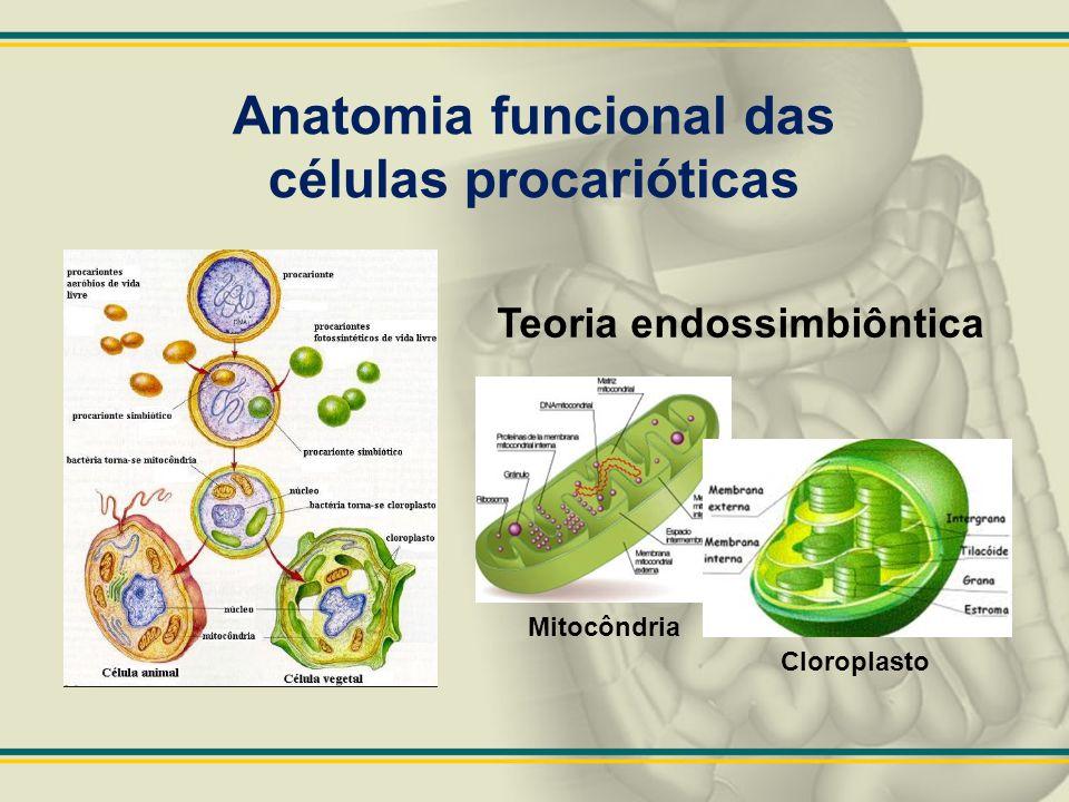 Anatomia funcional das células procarióticas Teoria endossimbiôntica