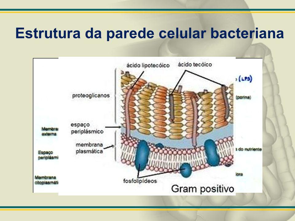 Estrutura da parede celular bacteriana