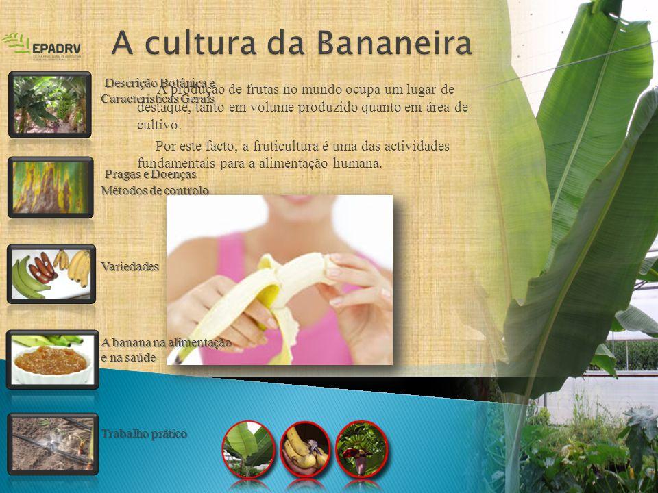 A cultura da Bananeira Descrição Botânica e Características Gerais. Pragas e Doenças Métodos de controlo.