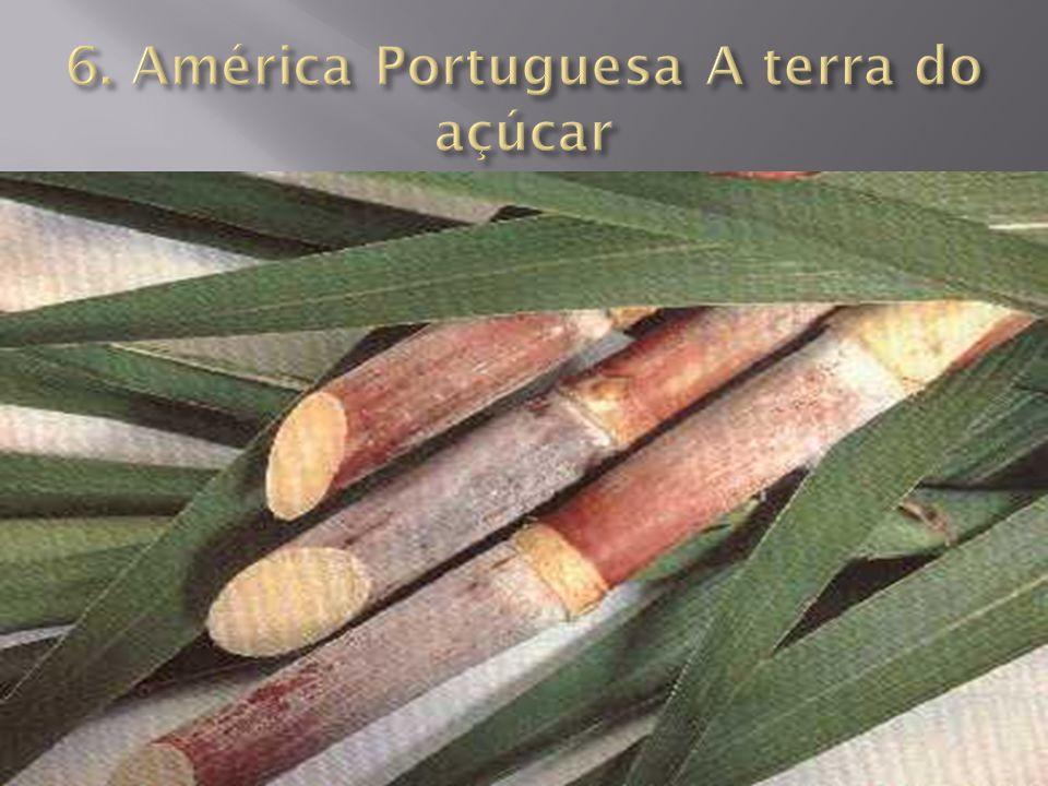 6. América Portuguesa A terra do açúcar