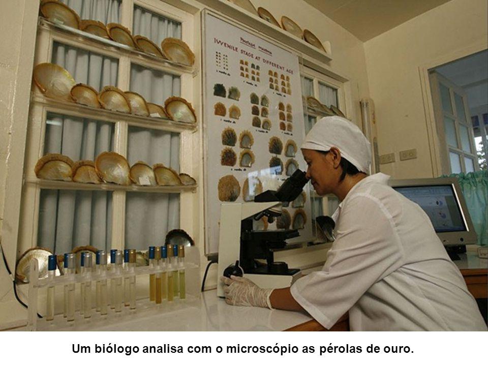 Um biólogo analisa com o microscópio as pérolas de ouro.