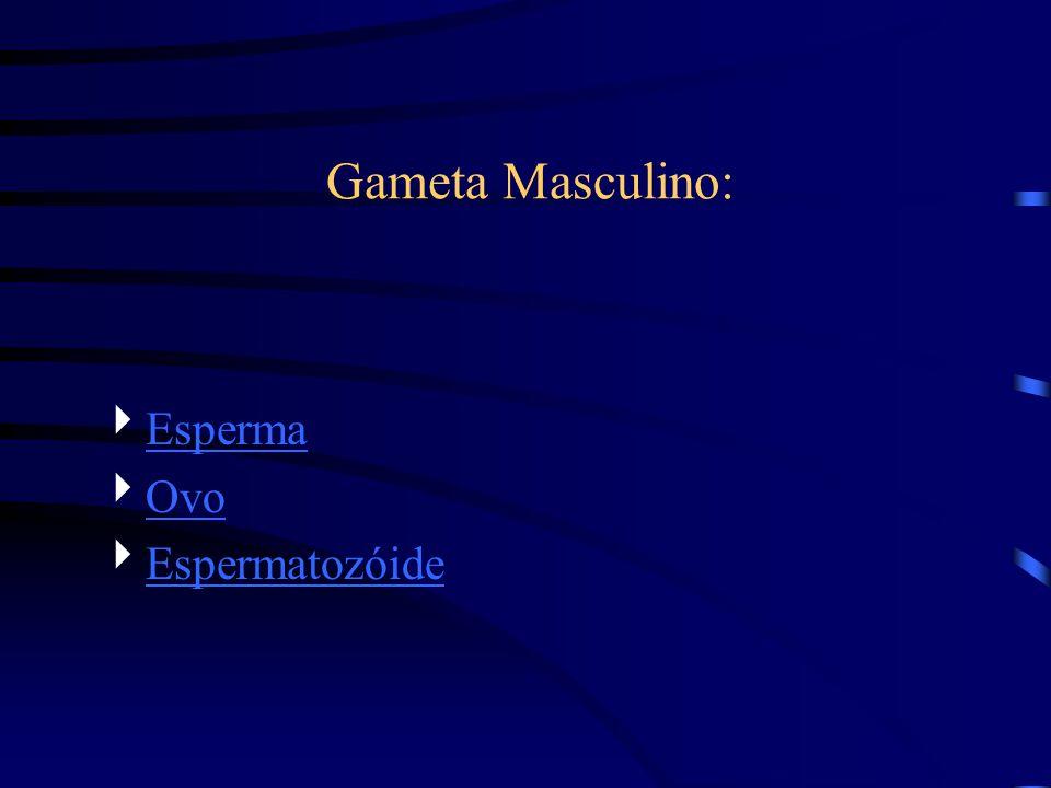 Esperma Ovo Espermatozóide