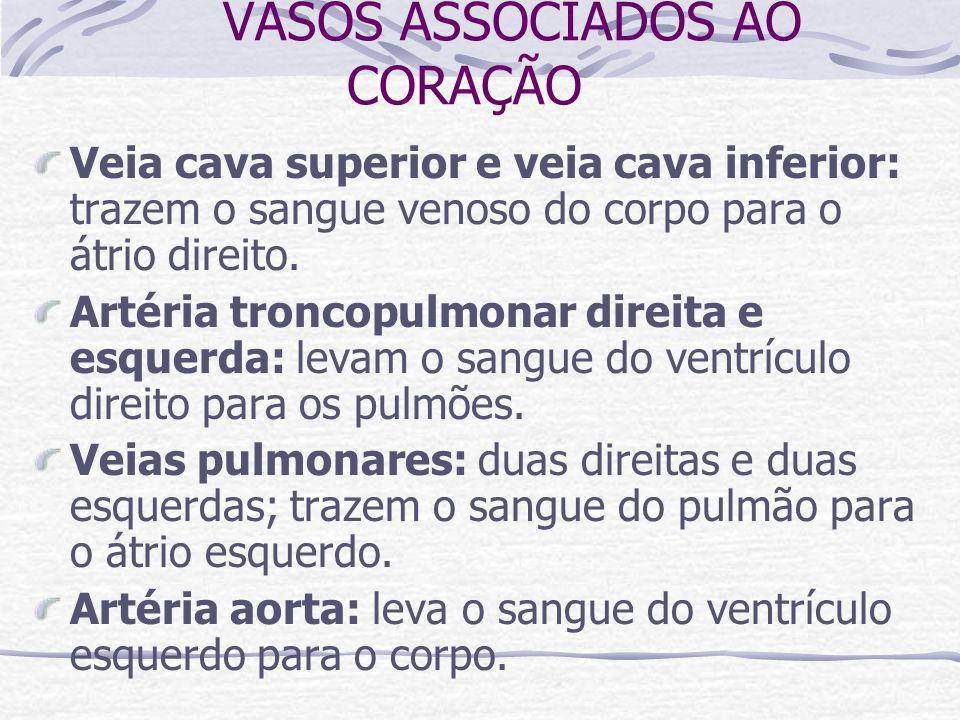 VASOS ASSOCIADOS AO CORAÇÃO