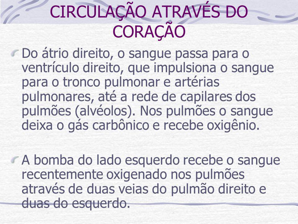 CIRCULAÇÃO ATRAVÉS DO CORAÇÃO