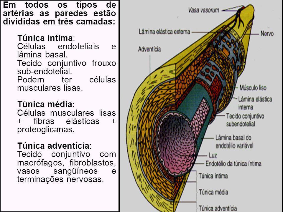 Em todos os tipos de artérias as paredes estão divididas em três camadas: