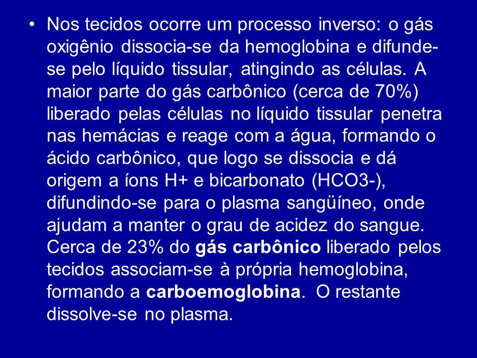 Nos tecidos ocorre um processo inverso: o gás oxigênio dissocia-se da hemoglobina e difunde-se pelo líquido tissular, atingindo as células.