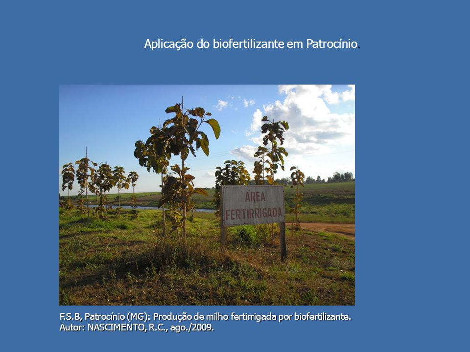 Aplicação do biofertilizante em Patrocínio.