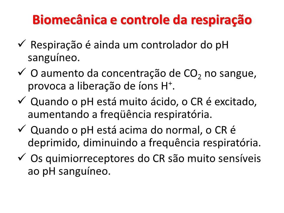 Biomecânica e controle da respiração
